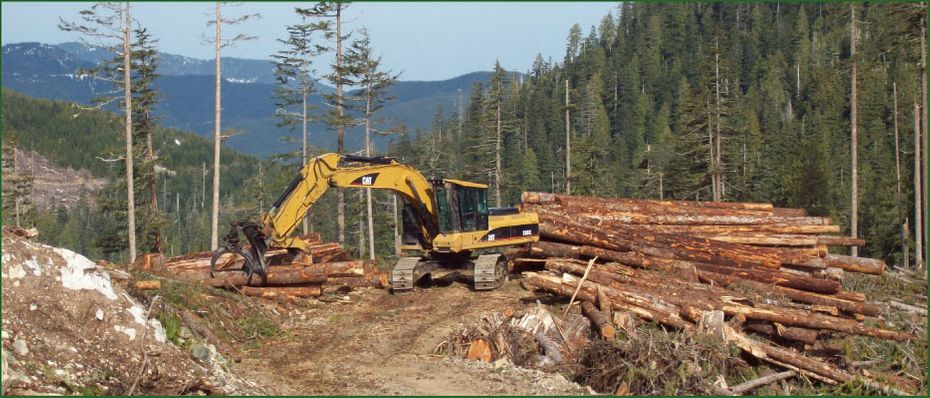 Tree Moving Machine Awaiting Logging Trucks